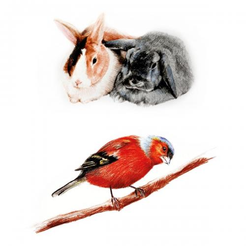 Various Animals portraits