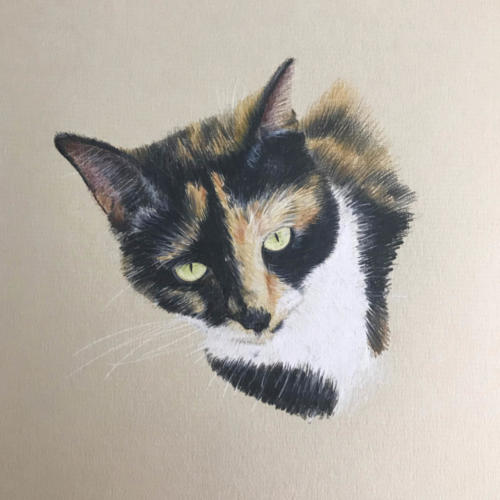 Cat Portrait 'Brandy'
